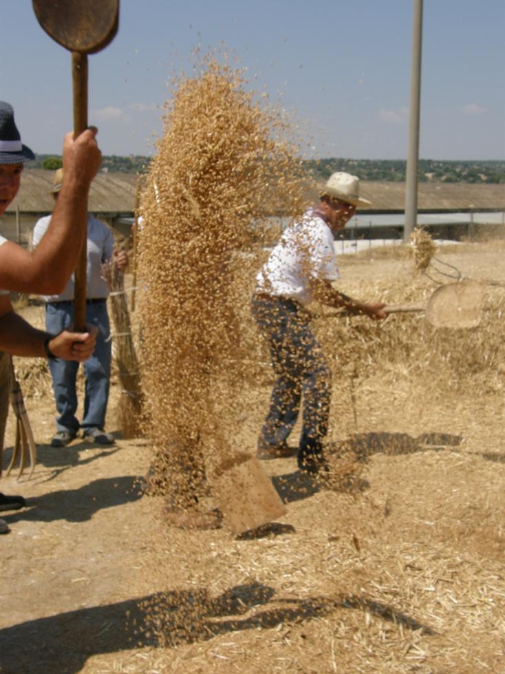 E san giovanni battista evangelizzava for Da dove proviene il grano della barilla